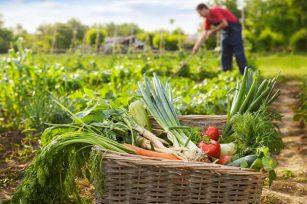 化肥,农药对土壤的影响分析!