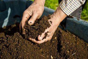 秋季施肥很重要,需要注意那些施肥误区?